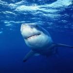 サメの撃退方法