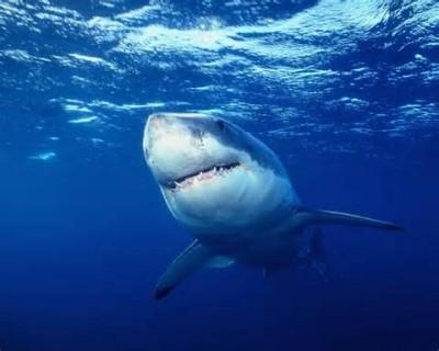 サメ撃退方法