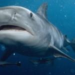 日本でサメに襲われ30針縫う大怪我